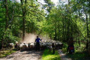 herder-bos
