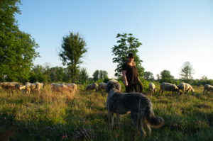 empese-tondense-heide-hond-herder